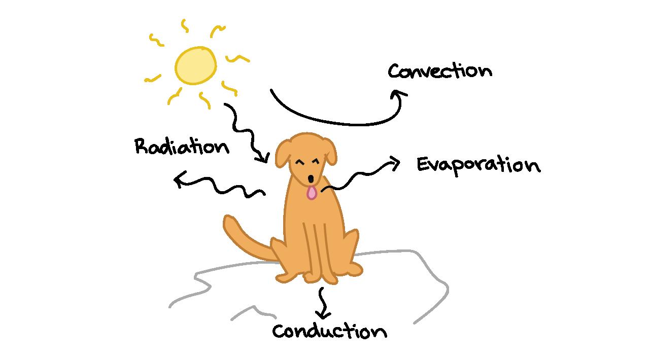 61c2336766 Luz do sol sobre um cão sentado no chão. A radiação está sendo absorvida e