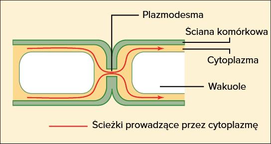 Połączenie komórkowe