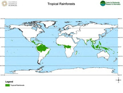 Tropical Rainforest In Africa Map.Tropical Rainforest Biomes Article Khan Academy