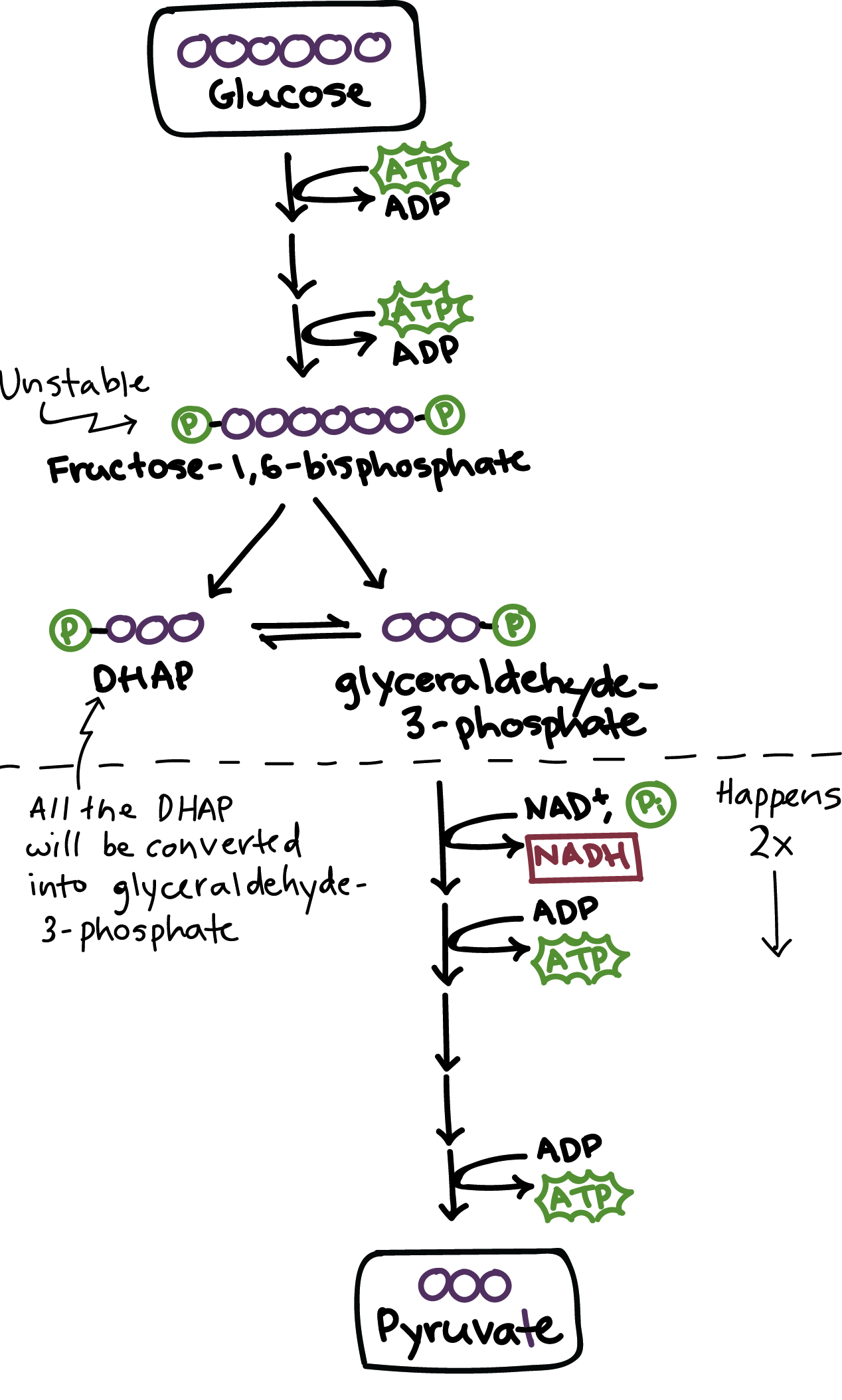 Simplified Diagram Of Glycolysis Energy Investment Phase Glucose Is First Converted To Fructose