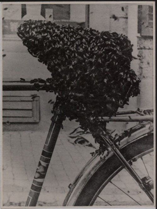 Meret Oppenheim, Bee-covered bicycle seat, found photograph, 1954