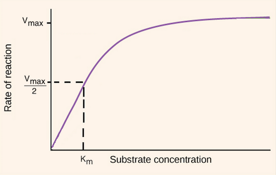 reaction rate enzyme concentration
