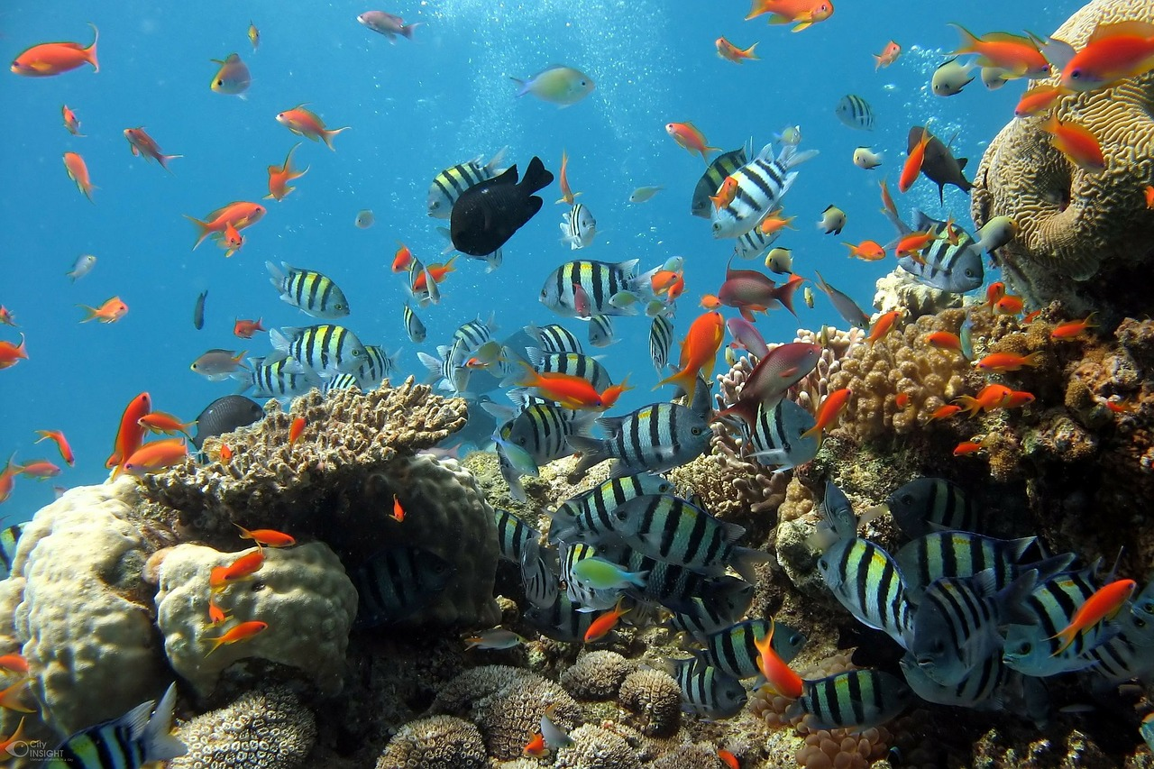 Image of a coral reef, showing many diverse species of fishes and corals living together and interacting with each other