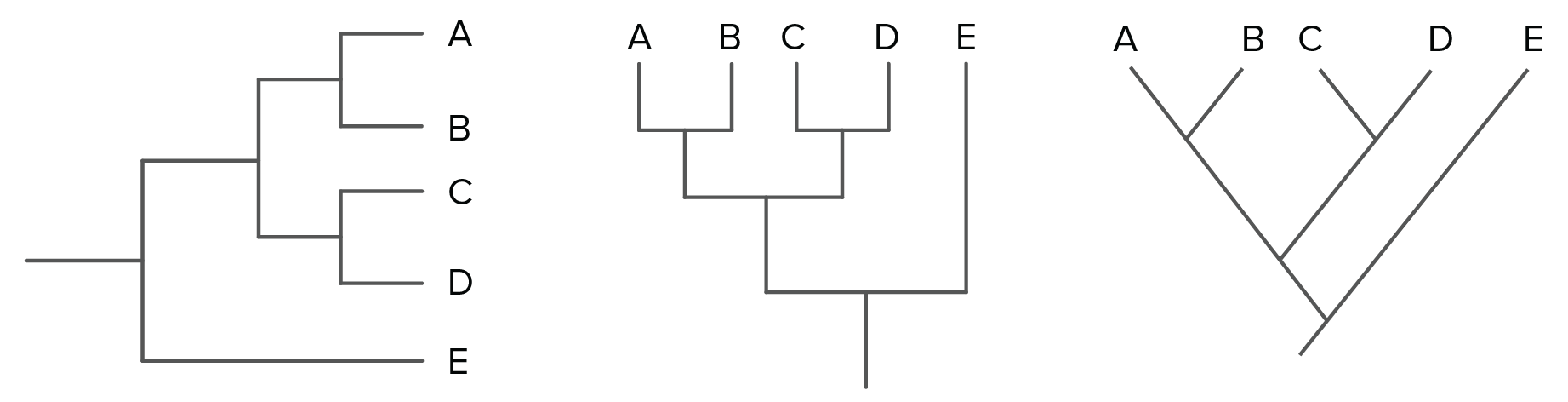 Phylogenetic Trees Evolutionary Tree Article Khan Academy Will Someone Kindly Find A Problem With My Diagramthanx Rob Image Modified From Taxonomy And Phylogeny Figure 2 By Robert Bear Et Al Cc 40