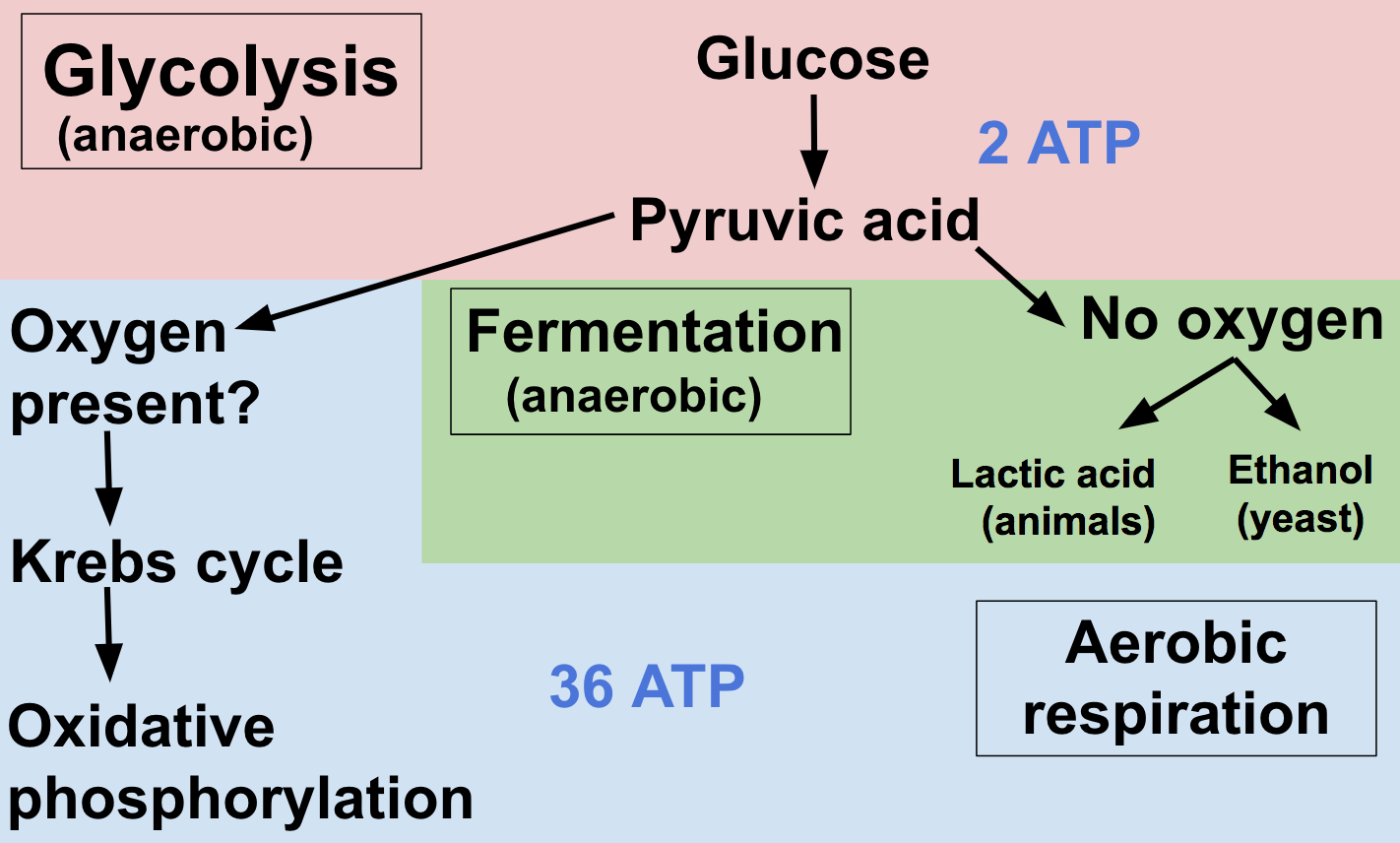 Cellular Respiration Review Article Khan Academy