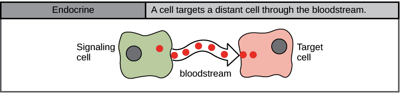 Introduction to cell signaling (article) | Khan Academy