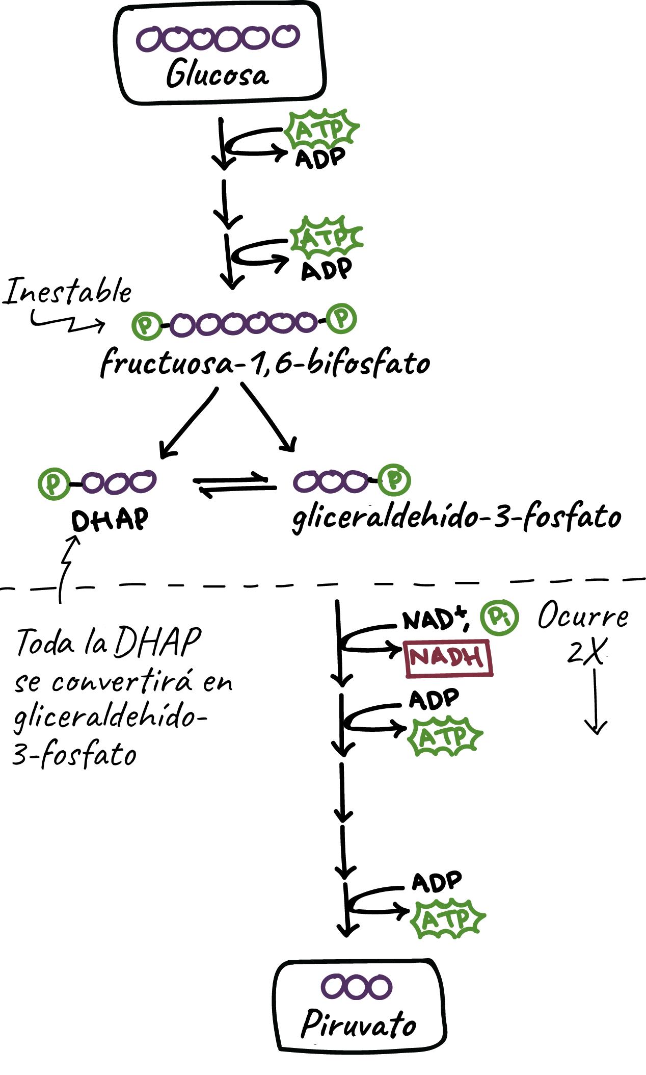 Estructura química de la glucosa