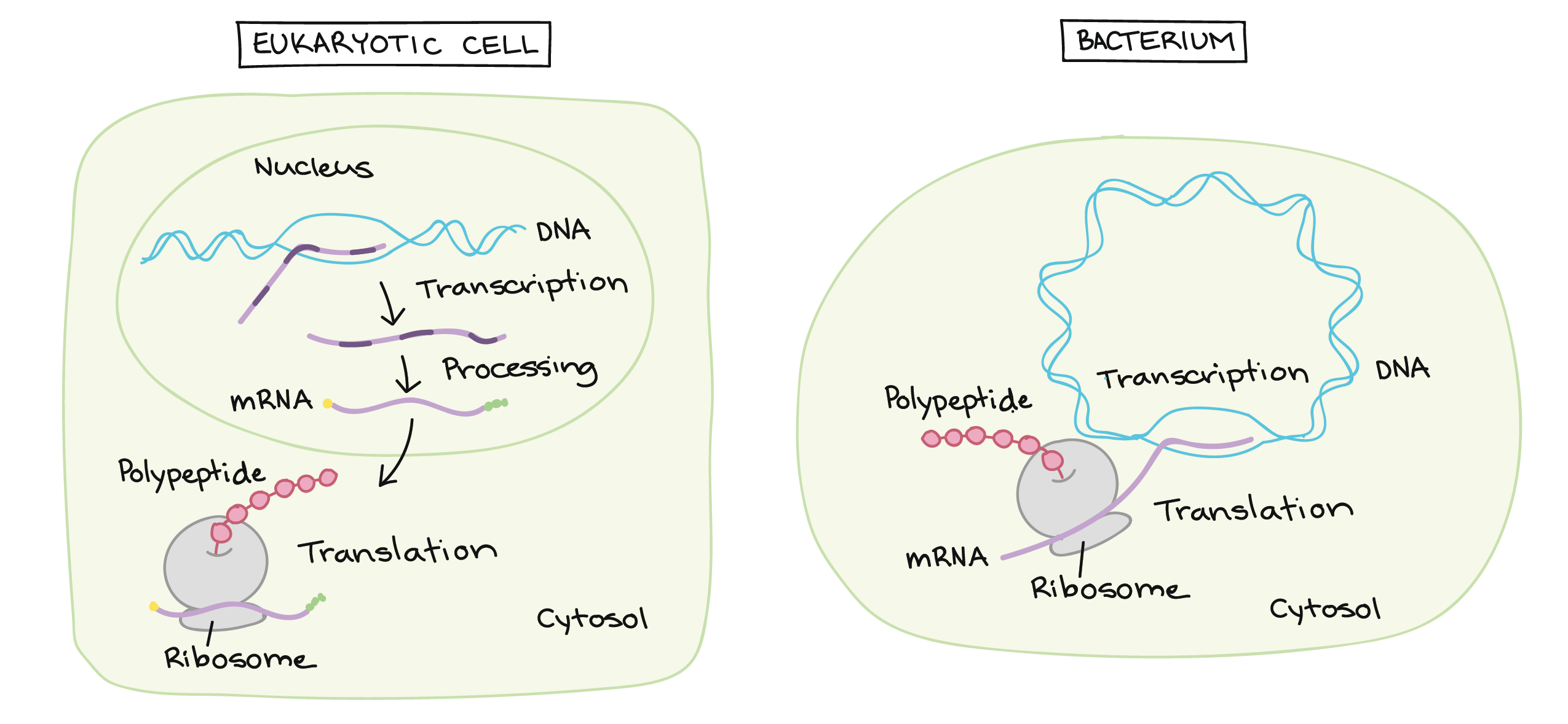 Topic rooms within Cell Biology