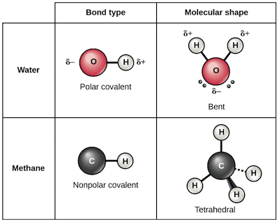 Chemical Bonds Chemistry Of Life Biology Article Khan Academy
