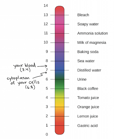 Ph Scale Acids Bases Ph And Buffers Article Khan Academy