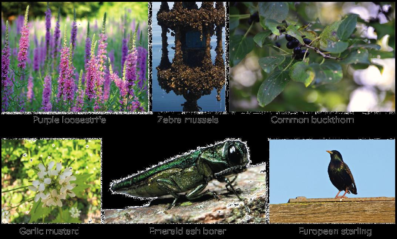 Invasive species (article) | Ecology | Khan Academy