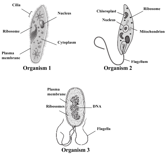 Prokaryotic   Eukaryotic Cell Worksheet by Amy Walker   TpT also  furthermore Prokaryotic and Eukaryotic Cells Worksheet Beautiful Prokaryotes Vs moreover Bacteria Coloring Pages Worksheet Answer Key Bacterial Cell further Prokaryotic and Eukaryotic Worksheet Answer Key Unique additionally Prokaryote and Eukaryote Worksheet besides Prokaryotic and eukaryotic cells  practice    Khan Academy together with Video  Prokaryotic versus Eukaryotic Cells   Ricochet Science in addition  moreover Prokaryotes Vs Eukaryotes Venn Diagram – WIRING DIAGRAM in addition Quiz   Worksheet   Eukaryotic vs  Prokaryotic Cells   Study as well Prokaryotic Vs Eukaryotic Cell Structure   Wiring Diagram Database besides  moreover Prokarvote vs Eukarvote Worksheet furthermore Prokaryotes Vs Eukaryotes Worksheet Answers Unique Unicellular furthermore Prokaryotes Vs Eukaryotes Venn Diagram   Diagram For You. on prokaryotic and eukaryotic cells worksheet