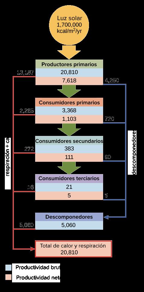 Flujo De Energía Y Productividad Primaria Artículo Khan
