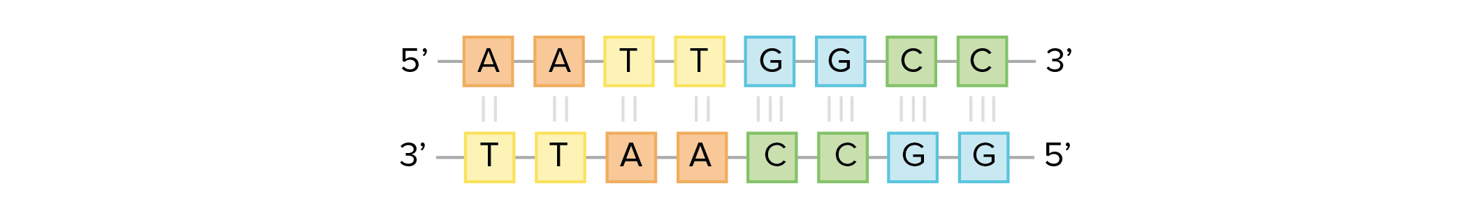 Dna Structure And Replication Review Article Khan Academy
