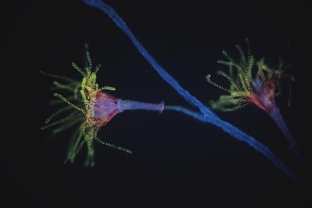 Reino Animalia Phyla Porifera Cnidaria Ctenophora Y
