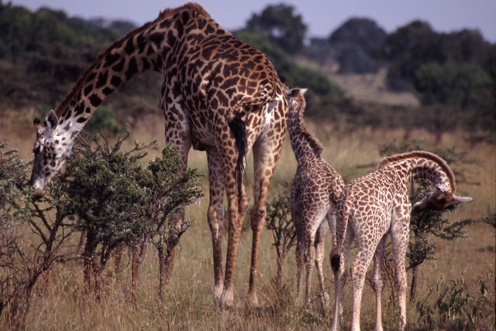 Tolerance ranges of species (article) | Khan Academy