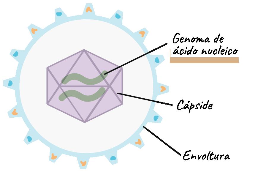 dos partes de un virus