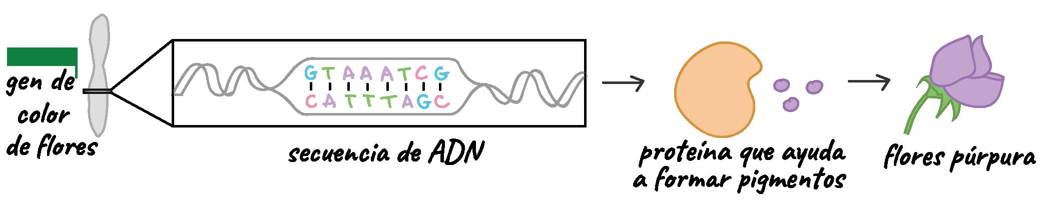 Introducción A La Expresión Génica Dogma Central Artículo