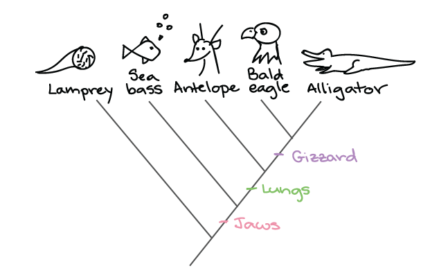 Building a phylogenetic tree (article) | Khan Academy