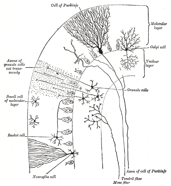 Overview Of Neuron Structure And Function Article