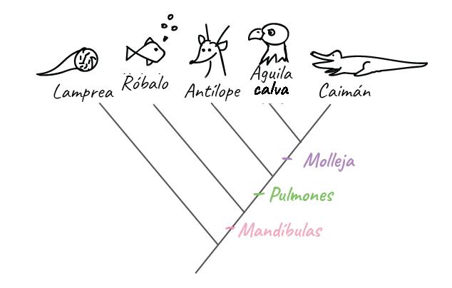 Cómo construir un árbol filogenético (artículo)   Khan Academy