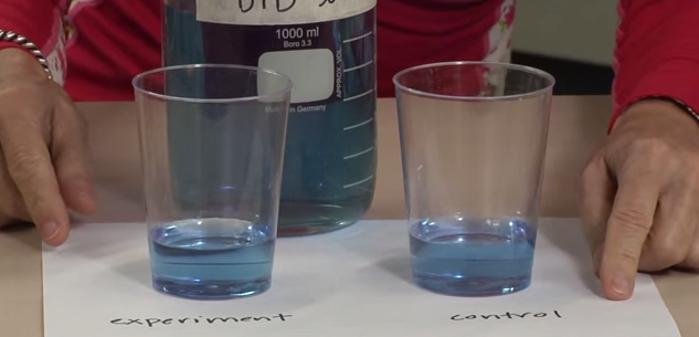 Ocean Acidification in a Cup: Complete Activity Guide (article