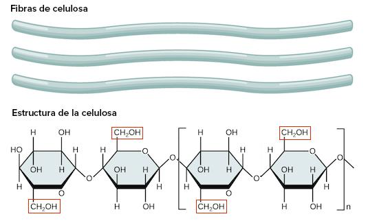 clasificacion por grupo funcional de los carbohidratos