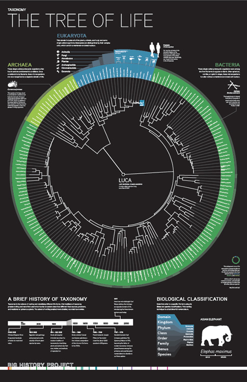 activity  the tree of life infographic