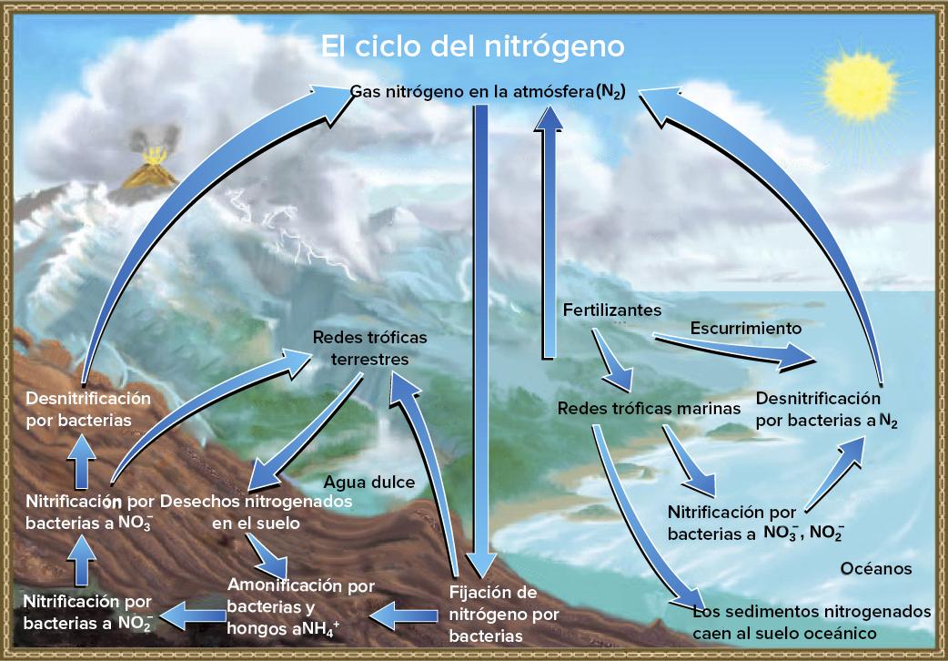 El Ciclo Del Nitrógeno Artículo Ecología Khan Academy