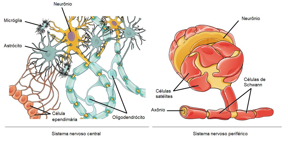 Visão Geral Da Estrutura Do Neurônio E A Sua Função Artigo