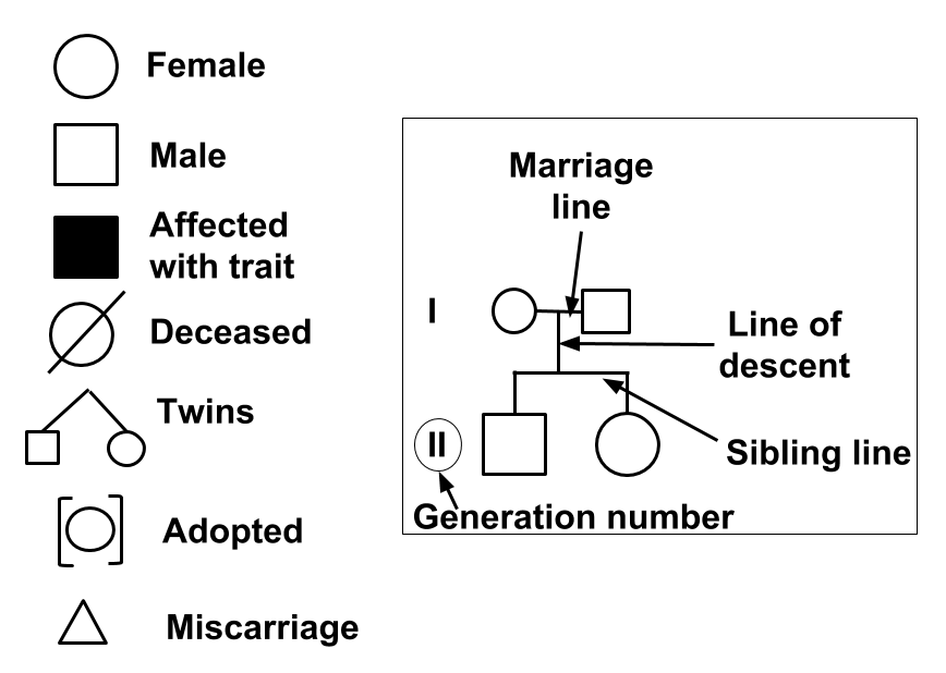 Common pedigree symbols and identifiers