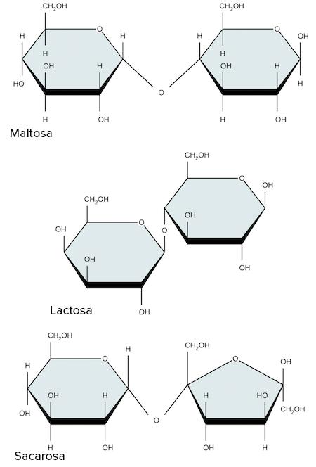 Carbohidratos Artículo Macromoléculas Khan Academy