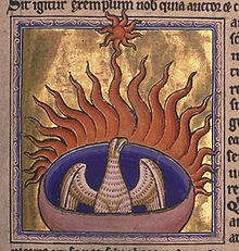 The phoenix from folio 56 recto of the Aberdeen Bestiary, written and illuminated in England around 1200. The Bestiary describes this magical bird as building its own funeral pyre and then rising from the ashes.