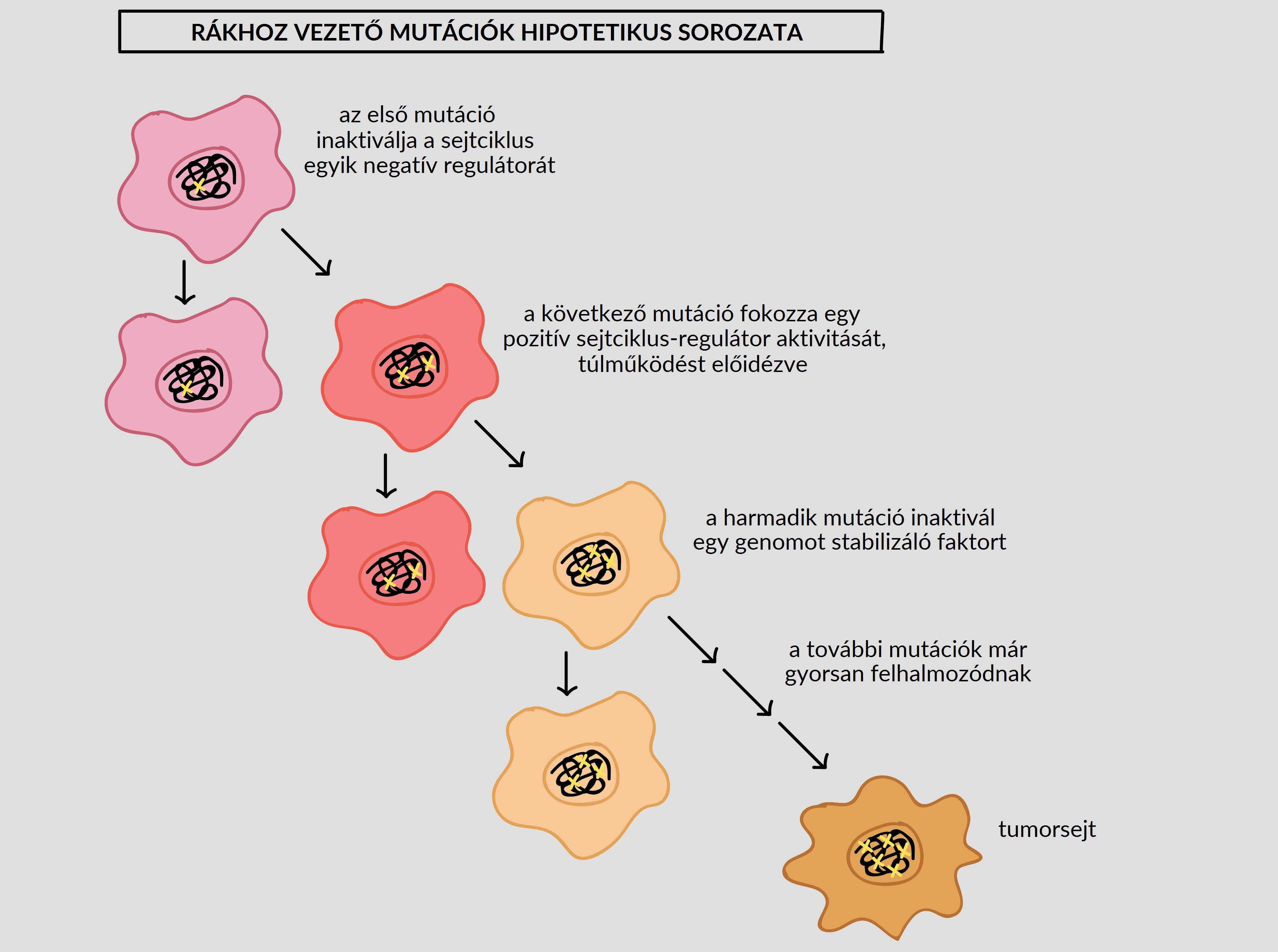 jóindulatú rákos őssejtek