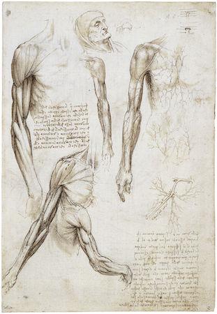 The Study Of Anatomy Article Khan Academy