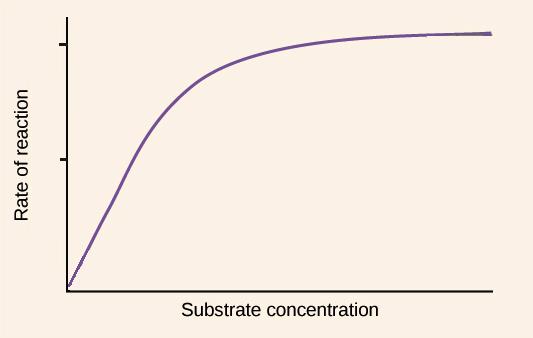 basics of enzyme kinetics graphs (article) khan academy