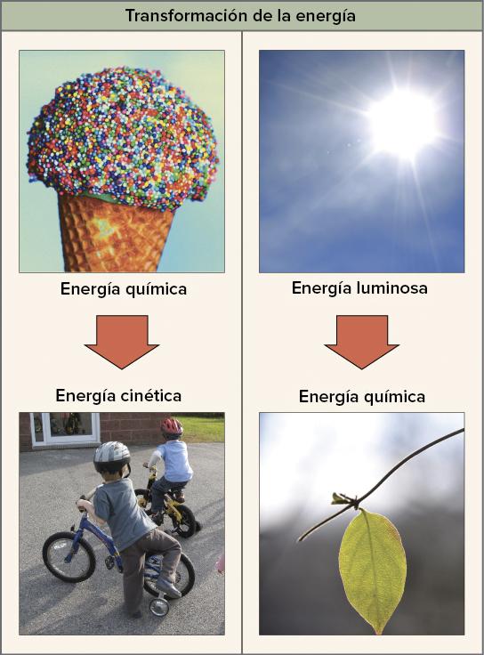 Imagen de un cono de helado (energía química) que se transforma en el movimiento de los niños al andar en bicicleta (energía cinética).  Imagen del sol (energía luminosa) que se convierte en azucares (energía química) en una hoja.