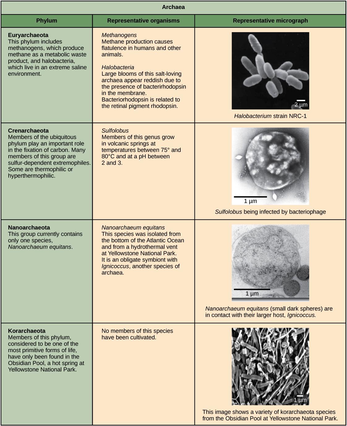 Prokaryote Classification And Diversity Article Khan Academy