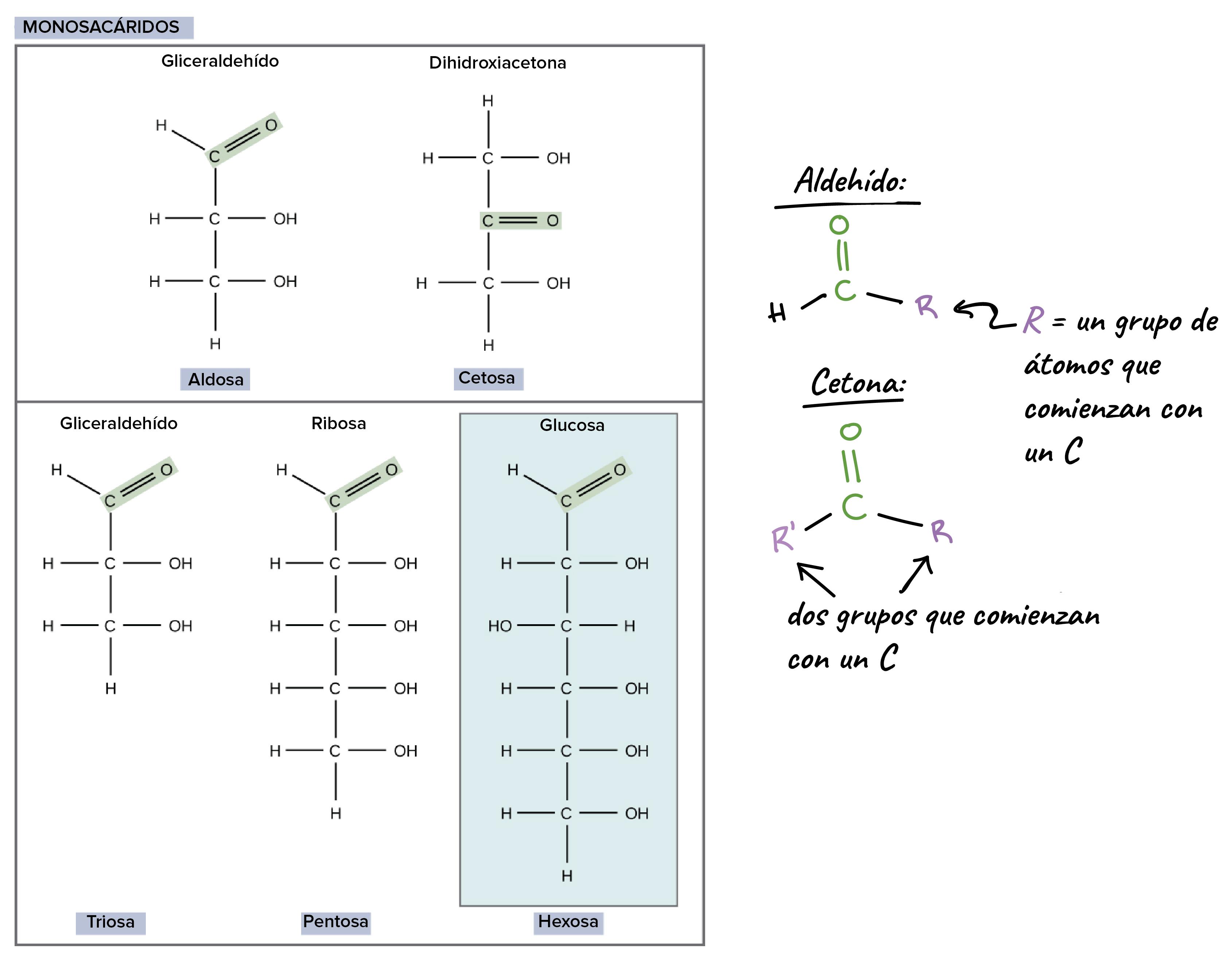 Glucosa compuesto o elemento