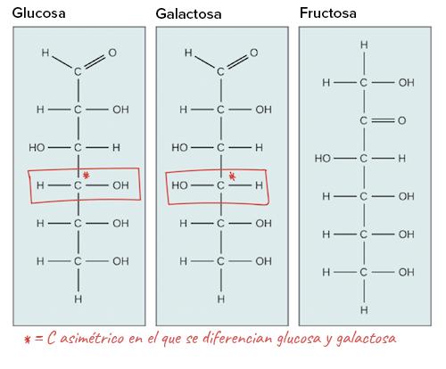 que+significa+la+palabra+glucosa+wikipedia