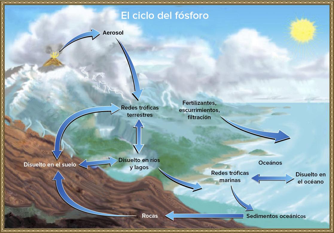 El Ciclo Del Fósforo Artículo Ecología Khan Academy