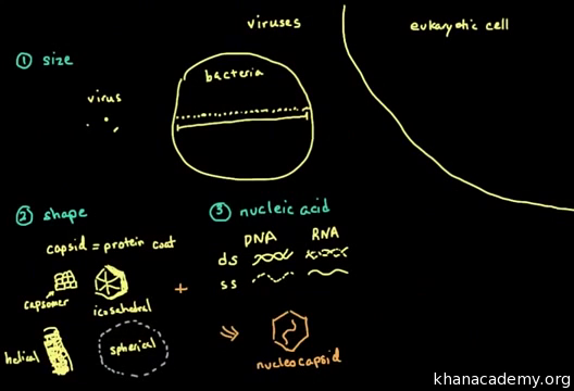 Virus structure and classification (video) | Khan Academy