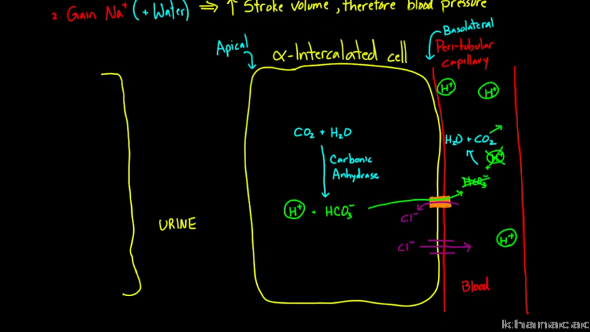 Renal system physiology | NCLEX-RN | Test prep | Khan Academy
