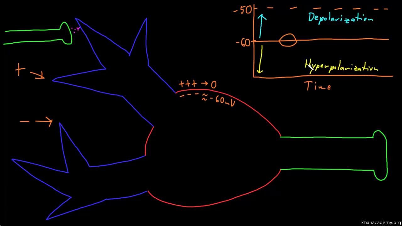 Organ systems | MCAT | Test prep | Khan Academy