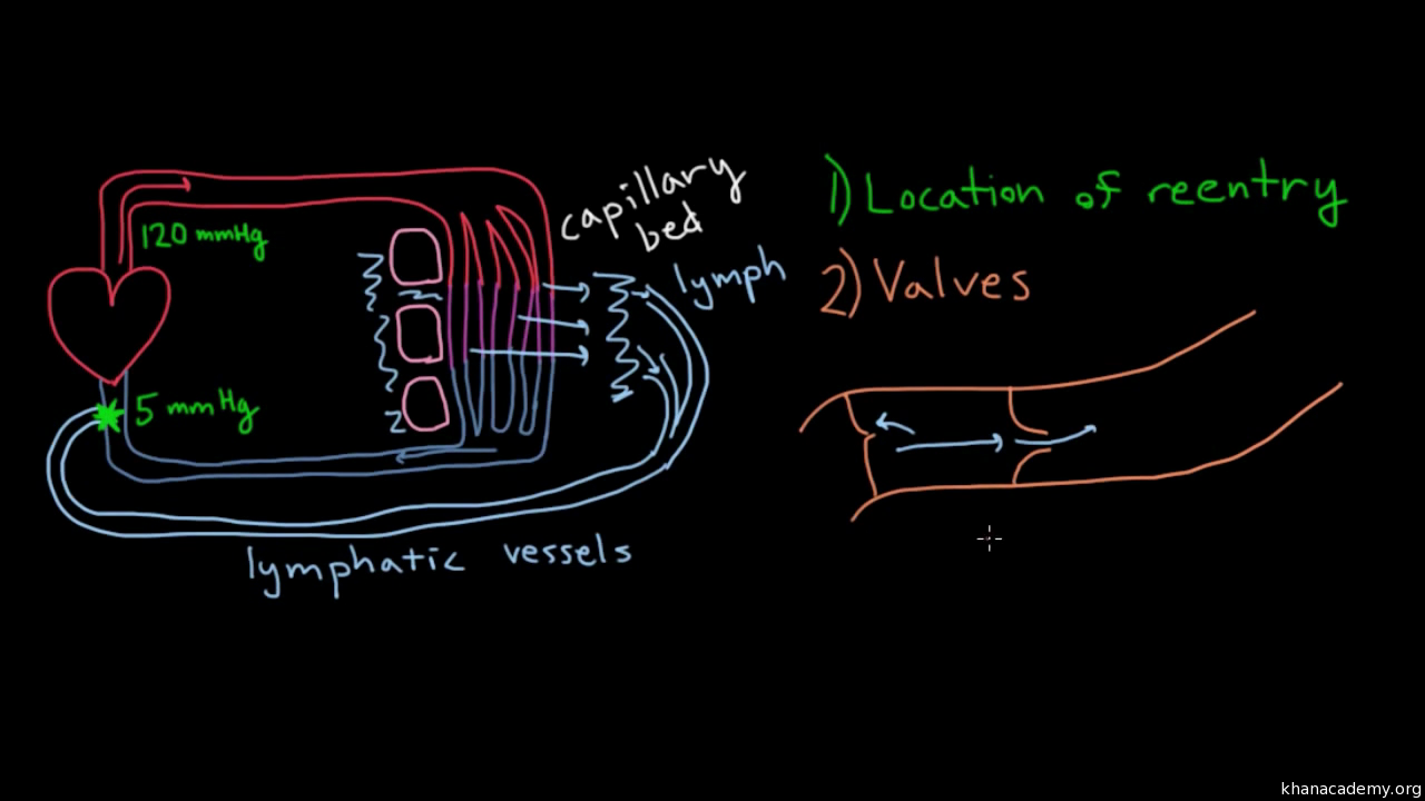 How lymphatic vessels move fluid