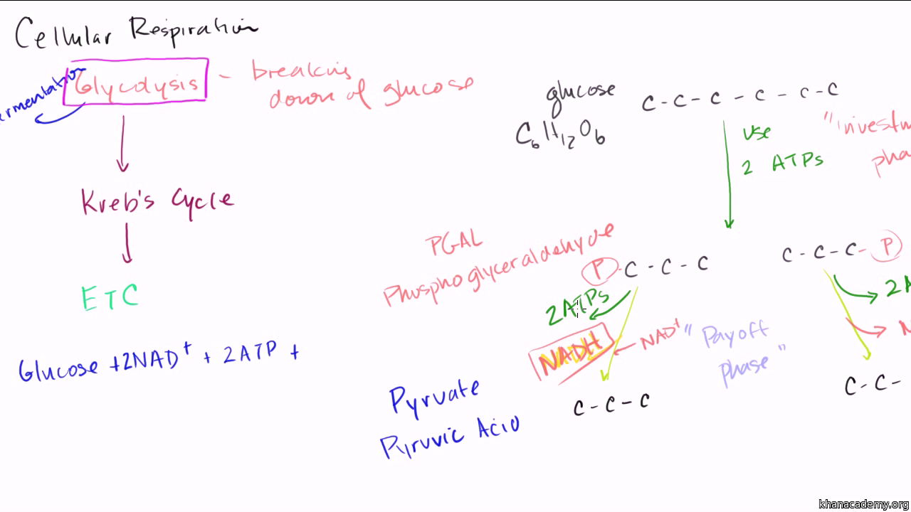 Overview Of Glycolysis Video Glycolysis Khan Academy