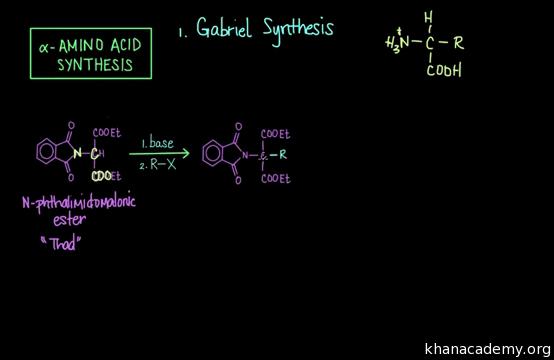 Alpha amino acid synthesis