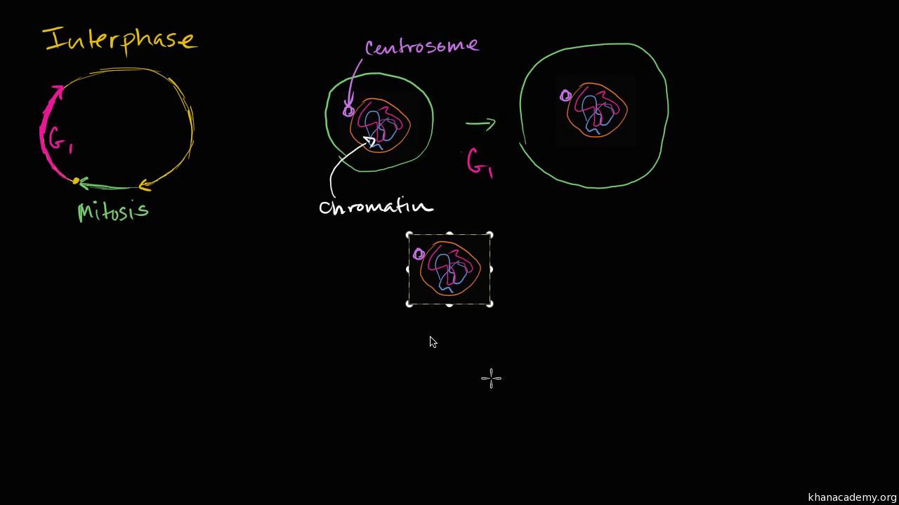 Interphase Video Khan Academy