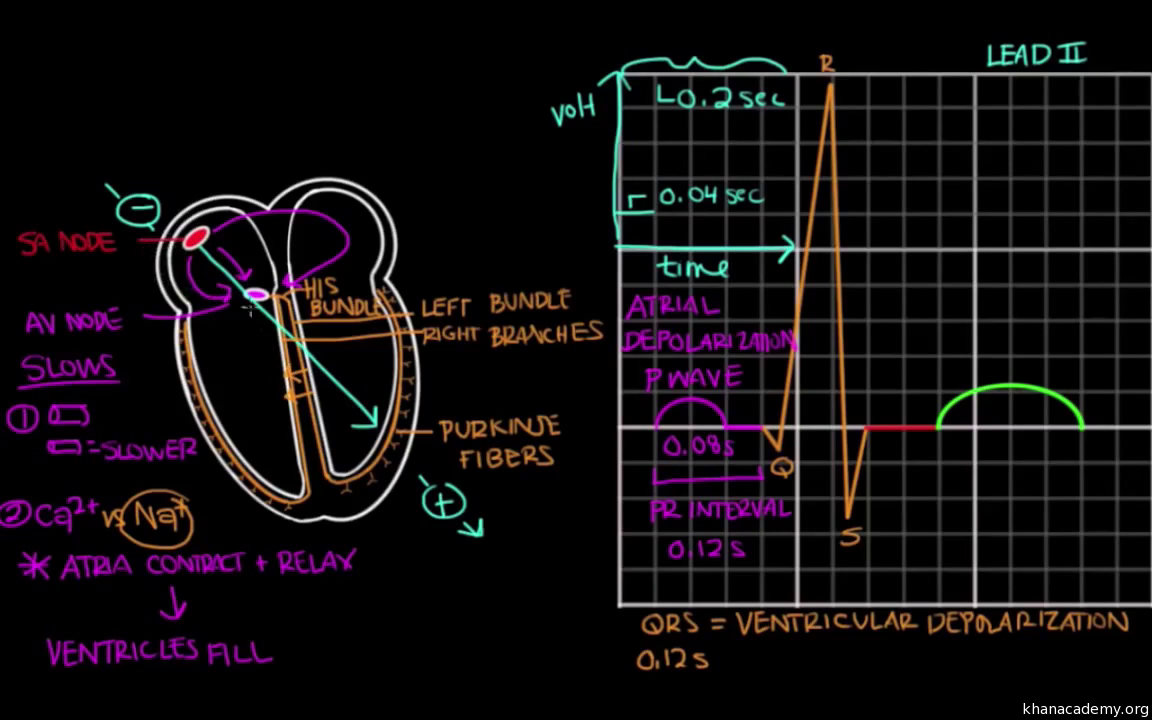 Normal sinus rhythm on an EKG
